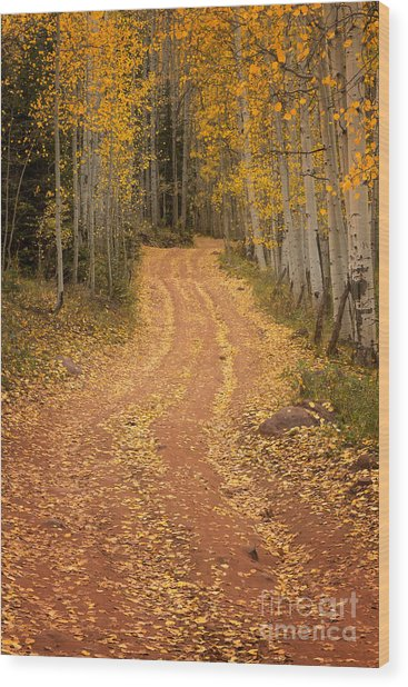 The Pathway To Fall Wood Print