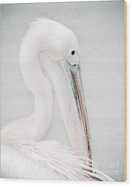The Pelican Wood Print