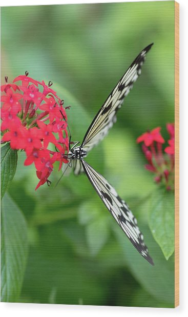 The Perfect Butterfly Land Wood Print