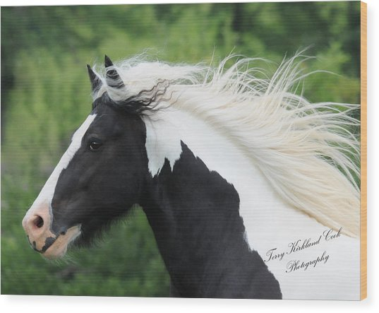 The Perfect Stallion  Wood Print by Terry Kirkland Cook