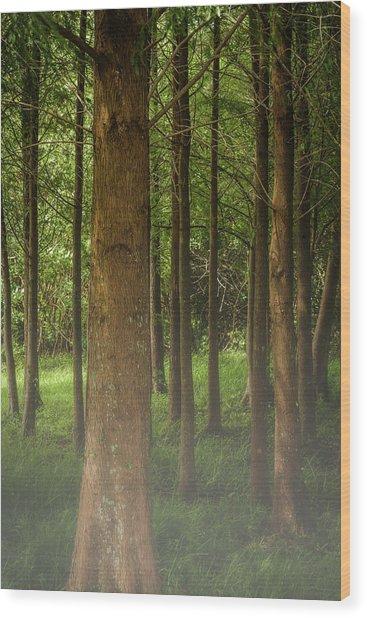 The Pines Wood Print