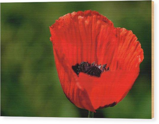 The Poppy Next Door Wood Print