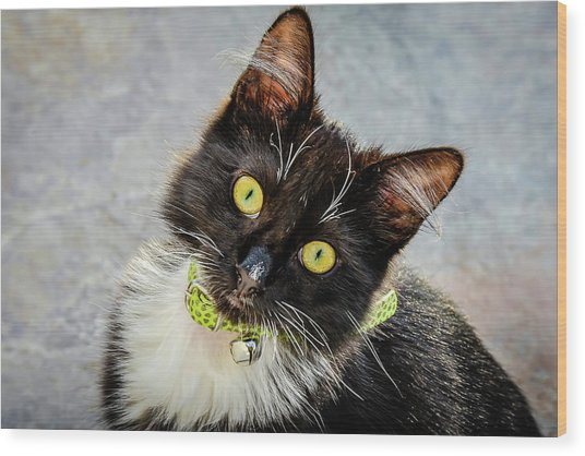 The Portrait Of A Cat Wood Print