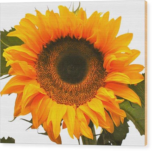 The Prettiest Sunflower Wood Print