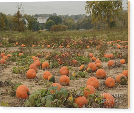 The Pumpkin Farm Two Wood Print