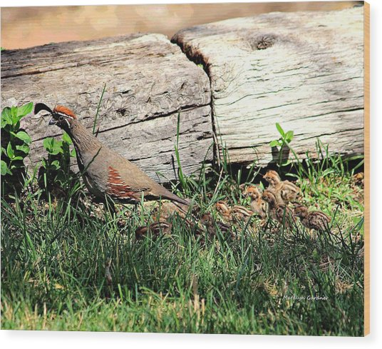 The Quail Family Wood Print
