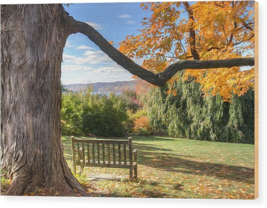The Reading Bench Wood Print by Zev Steinhardt