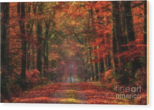 The Red Path 2 Wood Print