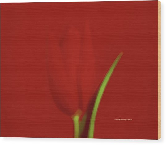 The Red Tulip Art Photograph 2 Wood Print