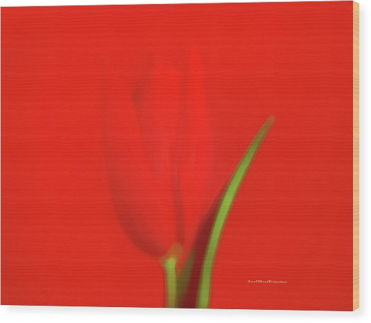 The Red Tulip Art Photograph Wood Print