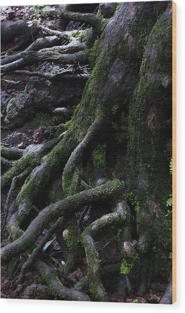 The Root Wood Print by Pramod Bansode