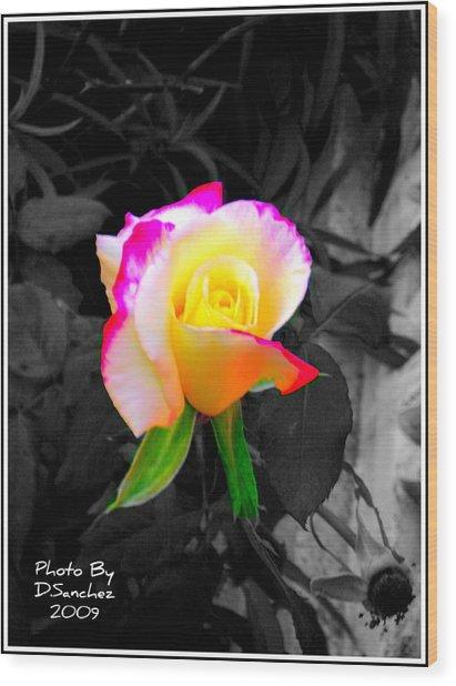 The Rose Wood Print by Doug Sanchez