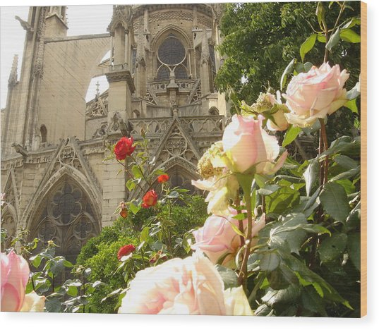 The Roses Of Notre Dame Wood Print by John Julio