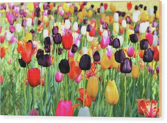 The Season Of Tulips Wood Print