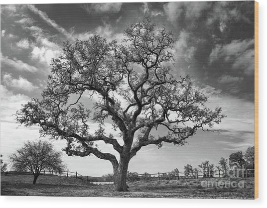 The Sentinel Bw Wood Print