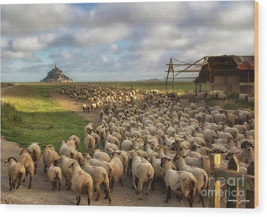 The Sheep Of Mont Saint Michel Wood Print