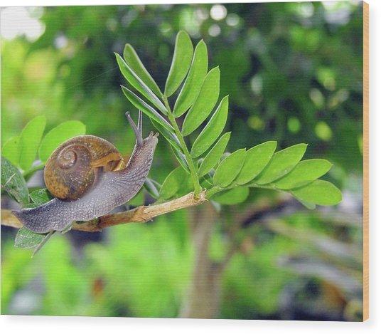 The Snail Wood Print