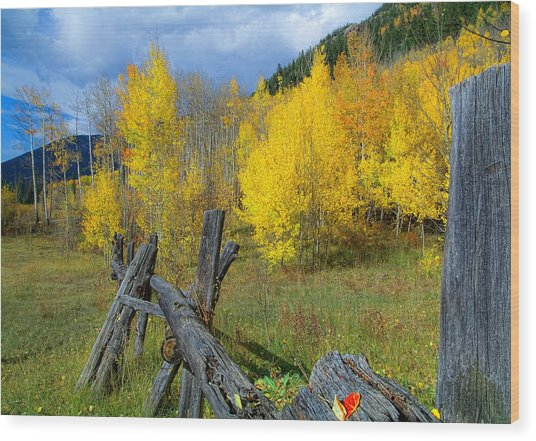 The Song Of Aspens Wood Print by Tim Reaves
