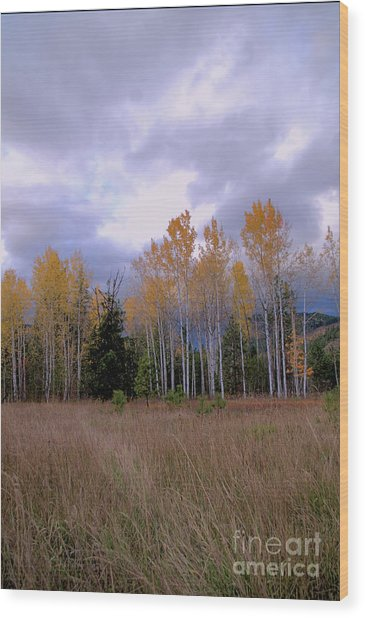 The  Song Of The Aspens 2 Wood Print