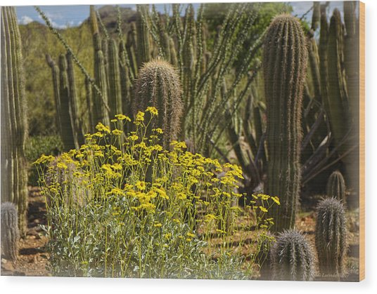 The Song Of The Sonoran Desert Wood Print