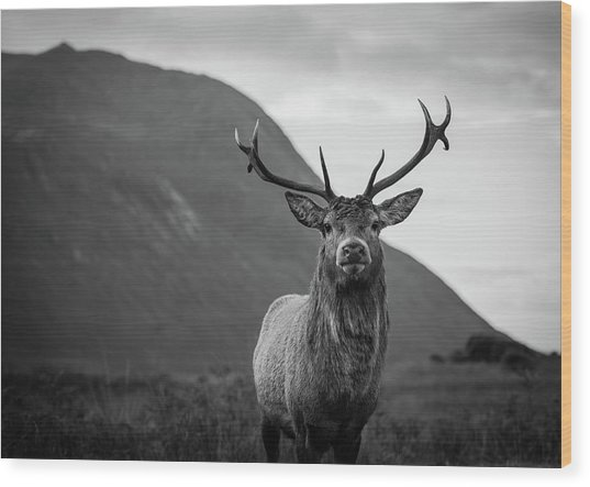 The Stag.  Wood Print