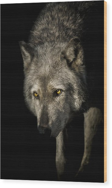 The Stalker Wood Print