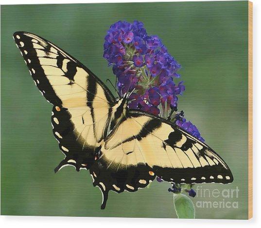 The Swallowtail Wood Print