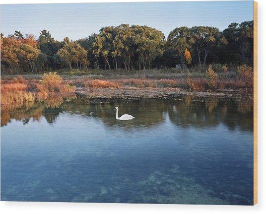 The Swan Of Cross Village Marsh Wood Print