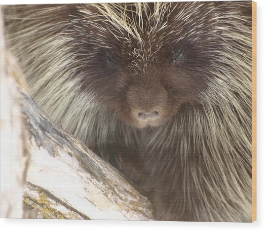 The Tender Side Of Porcupine Wood Print