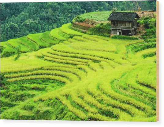 The Terraced Fields Scenery In Autumn Wood Print