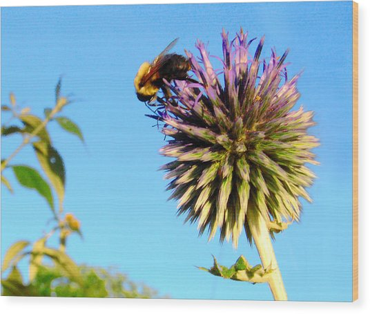 The Thistle And The Bee. Wood Print