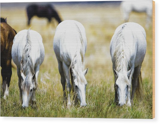 The Three Amigos Grazing Wood Print