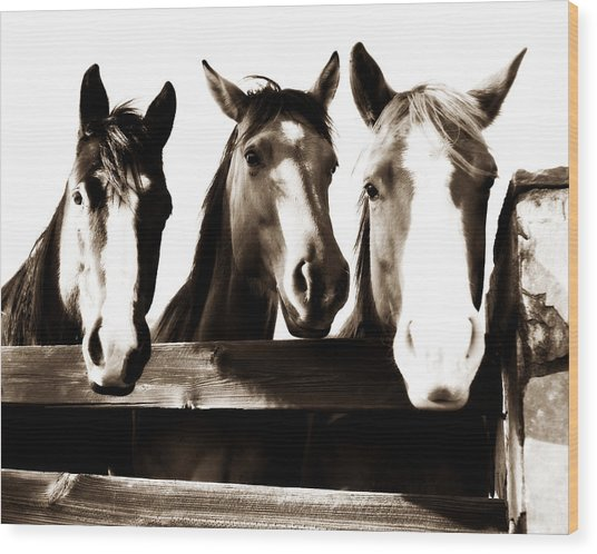 The Three Amigos In Sepia Wood Print