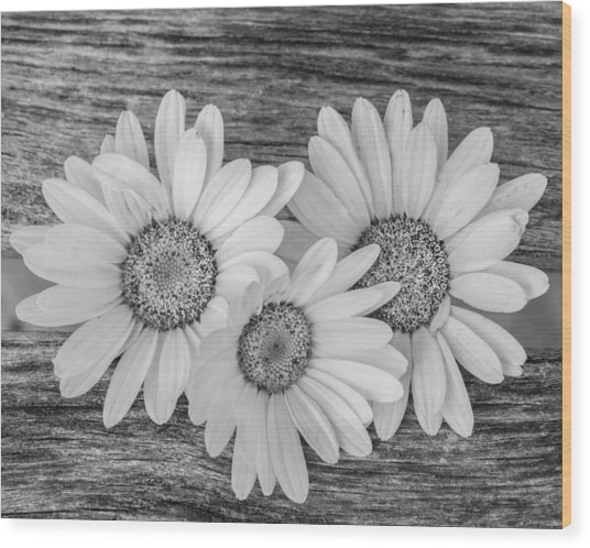 The Three Of Us Wood Print