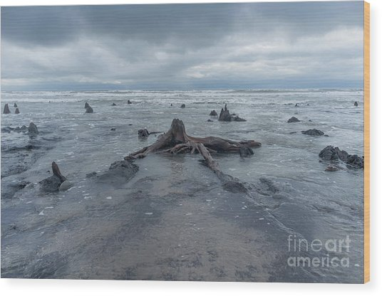 The Tide Comes In Over The Bronze Age Sunken Forest At Borth On The West Wales Coast Uk Wood Print