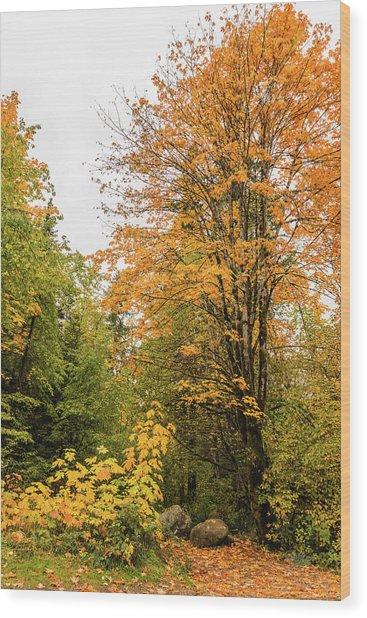 The Trail Starts Here Wood Print