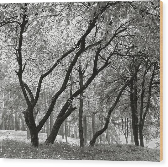 Wood Print featuring the photograph The Trees Dancing. Chernihiv, 2014. by Andriy Maykovskyi