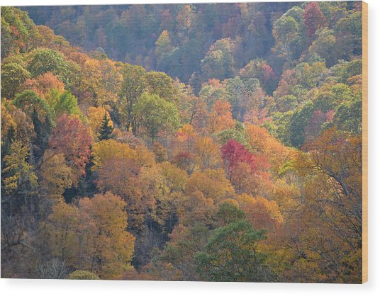 The Trees Of Autumn On The Blue Ridge Wood Print