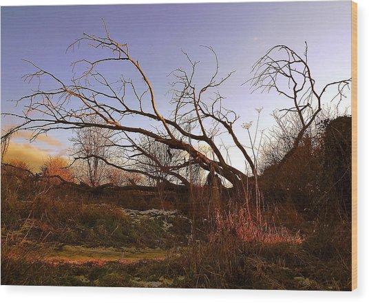 The Twilight Tree Wood Print by Sophia Shine