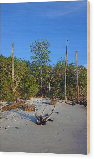 The Unspoiled Beauty Of Barefoot Beach In Naples - Portrait Wood Print
