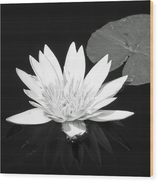 The Vintage Lily II Wood Print