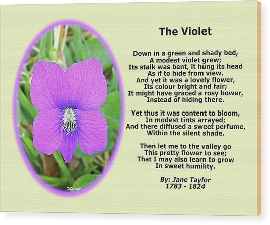 The Violet Classical Wildflower Nature Poetry By Jane Taylor Wood Print by Maxwell