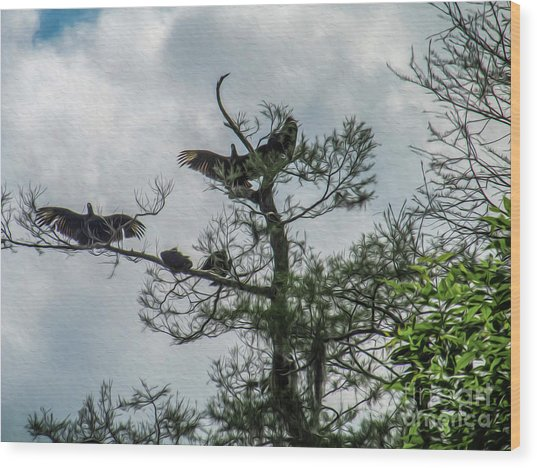 The Vultures Are Waiting Wood Print