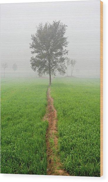 The Walking Tree Wood Print