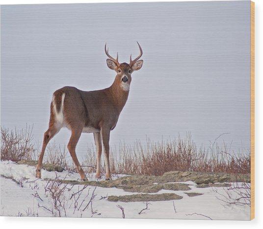 The Watchful Deer Wood Print