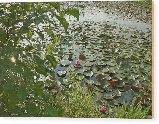 The Water Lily Pond Wood Print by Molly Dean