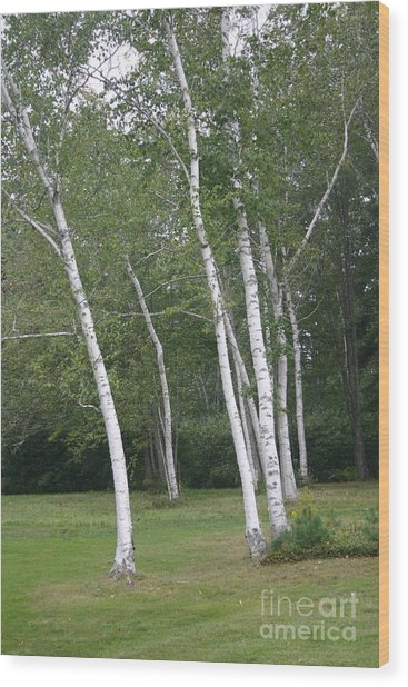 The White Birch Wood Print by Dennis Curry