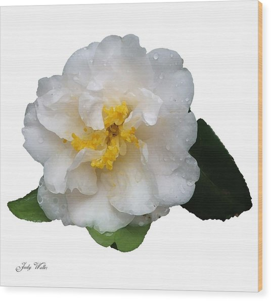 The White Flower Wood Print by Judy  Waller