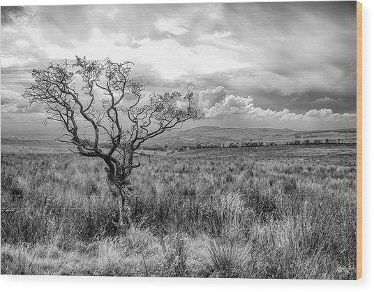 The Windswept Tree Wood Print
