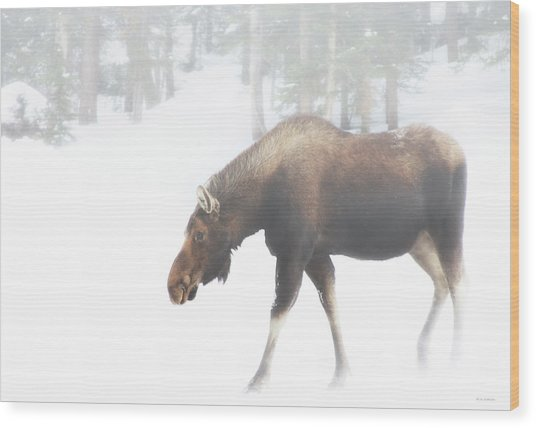 The Winter Moose Wood Print